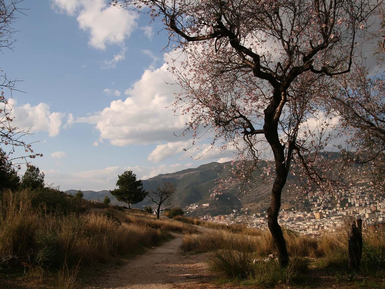 Cherry, cherry blossom, cherry tree, Turkey, Landscape.