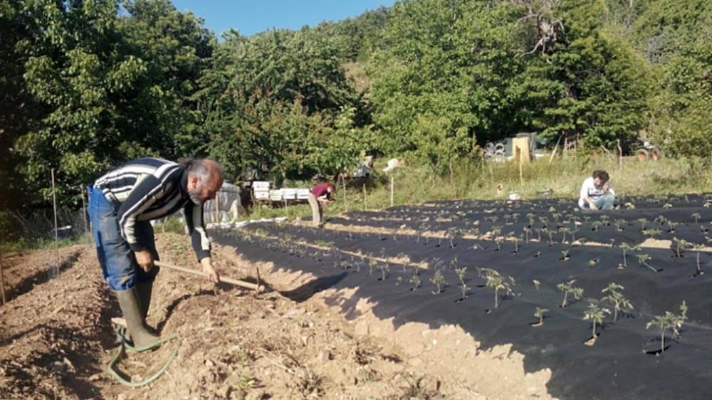 Ecological Farms in Turkey for a Sustainable Life
