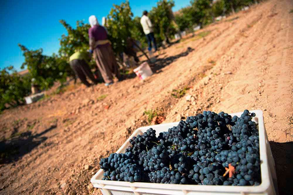 Bozcaada Wine Harvest Festival